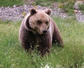 Scanno e Parco Nazionale d'Abruzzo