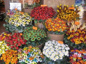 Sulmona: Confetti