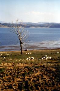 Lago di Campotosto (di E. Rainaldi)